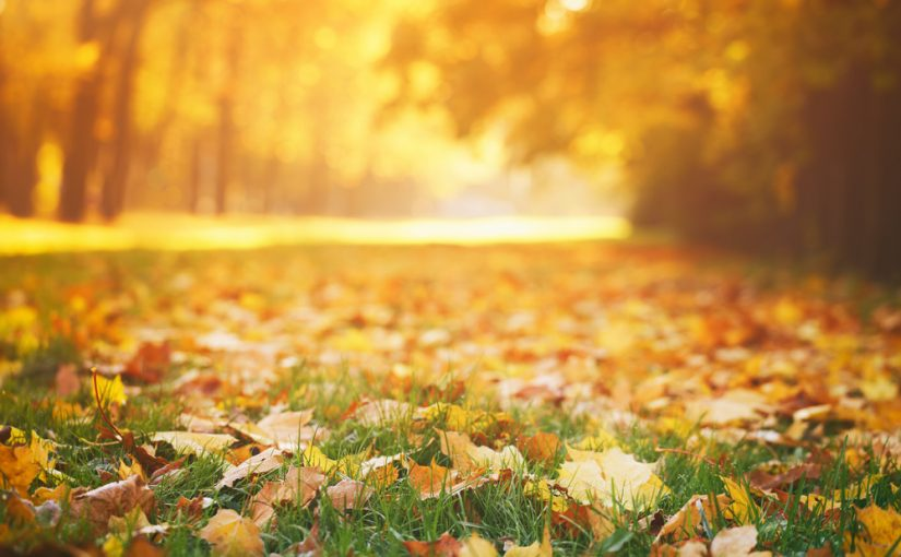 Fall Events in Orange County